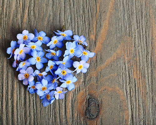 Forget me not flowers made into a heart on wooden background.